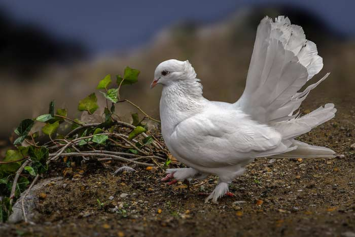 Приметы про птиц - хорошие и плохие