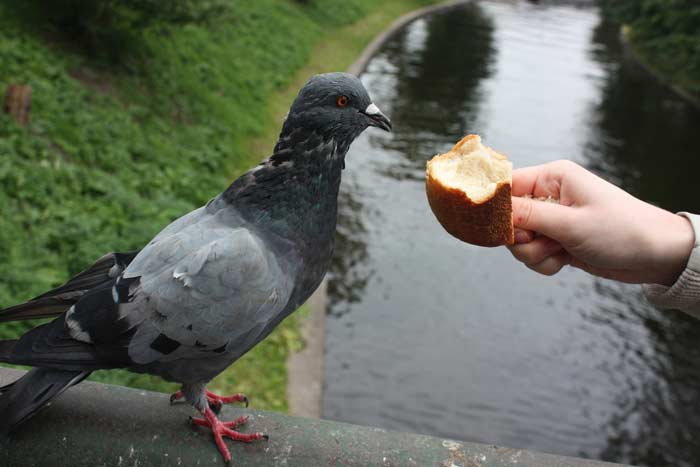 хлебом