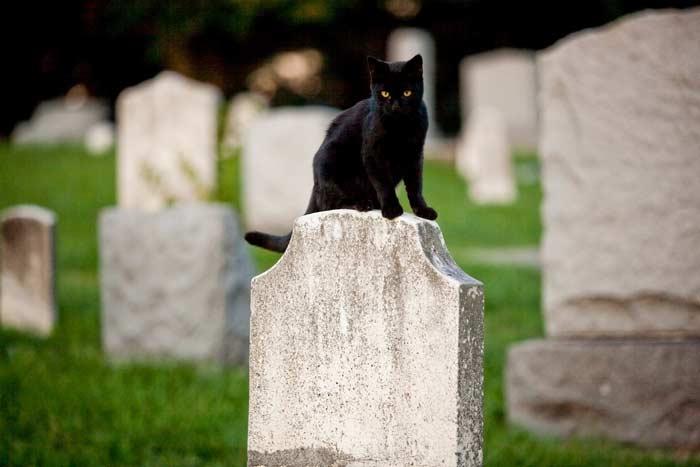 на могиле кошка