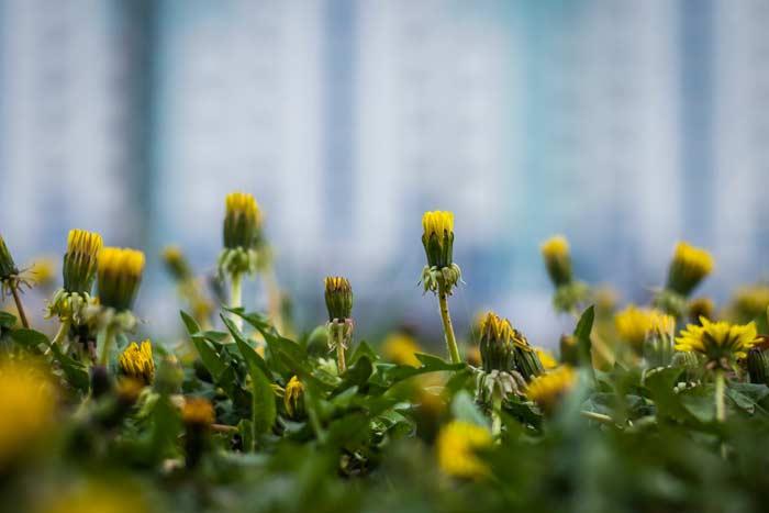 Приметы на погоду по растениям и животным