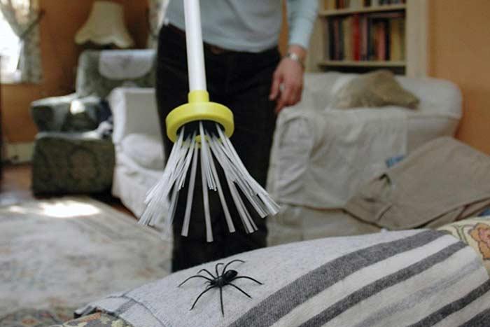 Случайно убить паука примета
