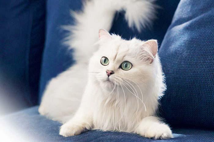 Приметы о цвете кота