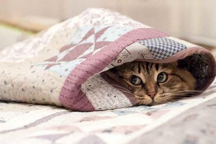 на кровати