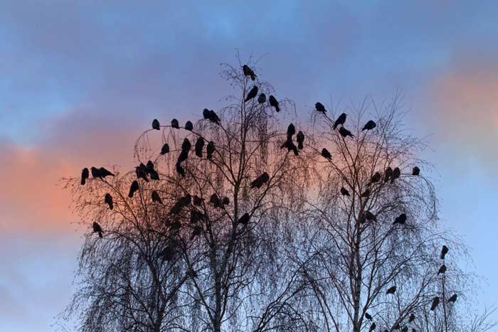 птицы на деревьях