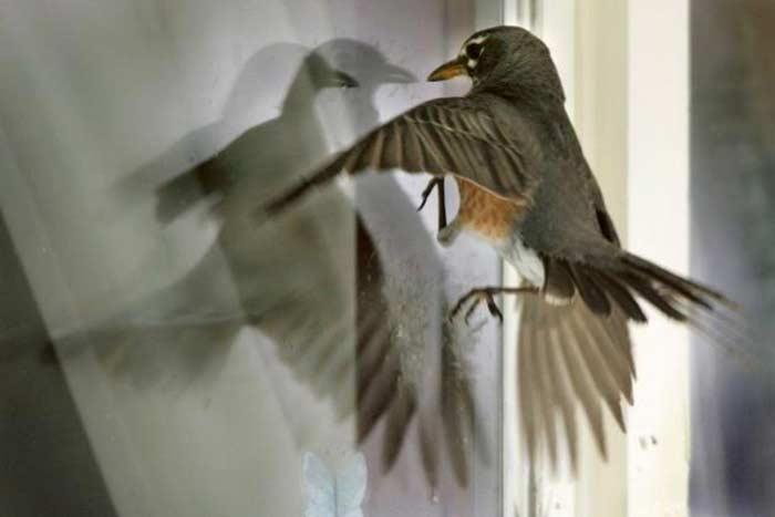 Что значит примета птица ударилась в окно