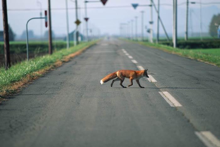 через дорогу