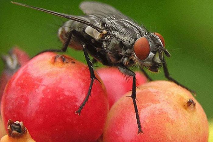 Что делать если муха залетела