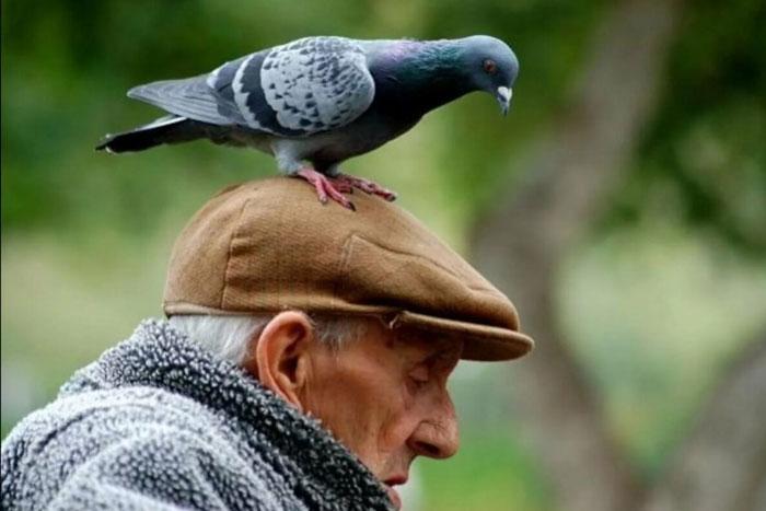 Толкование народной приметы птица накакала на голову