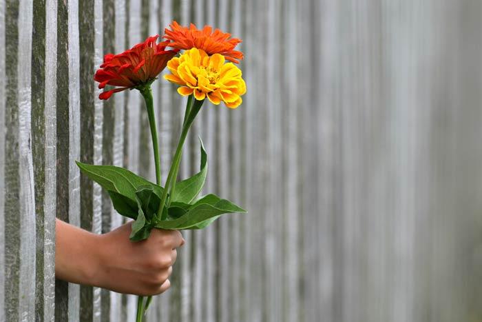 3 цветка